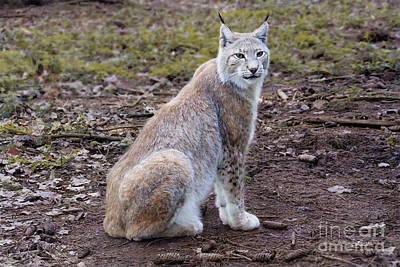 Photograph - Beautiful Lynx by Jutta Maria Pusl