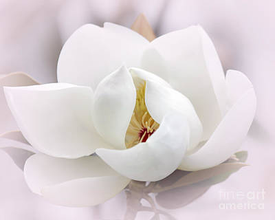 Photograph - Beautiful Magnolia Bloom by Sabrina L Ryan