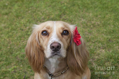 Photograph - Beautiful Maisie by Diane Macdonald