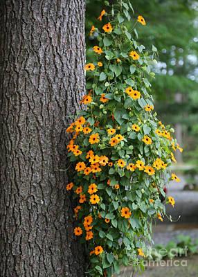 Photograph - Beautiful Orange Hanging Flowers by Sabrina L Ryan
