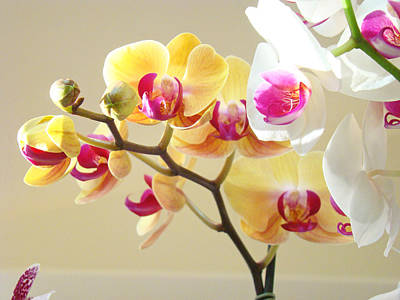 Flower Healing Art Photograph - Beautiful Orchids Floral Art Prints Orchid Flowers by Baslee Troutman