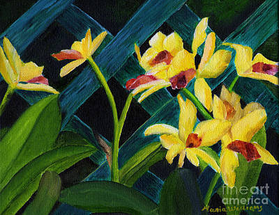 Beautiful Orchids  Art Print by Maria Williams