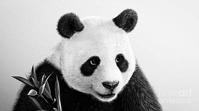 Photograph - Beautiful Panda Black And White 3 by Boon Mee