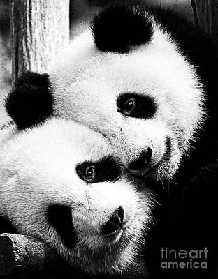 Photograph - Beautiful Panda Black And White 6 by Boon Mee