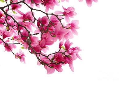 Deer Resistant Flowers Photograph - Beautiful Pink Flower by Boon Mee