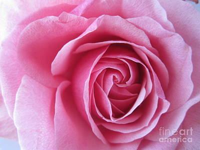 Photograph - Beautiful Pink Rose Macro by Tara  Shalton