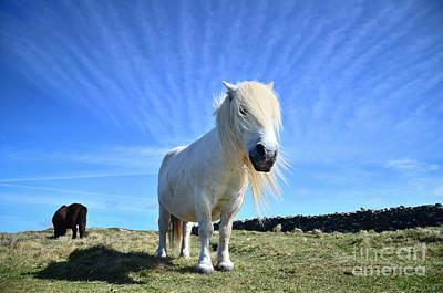 Beautiful Poney Grazing Near The Lizard - Cornwall Art Print by OUAP Photography