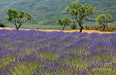 Photograph - Beautiful Provence by JR Photography