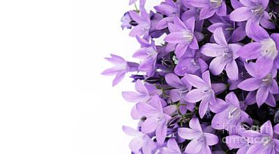 Beautiful Purple Flower Art Art Print