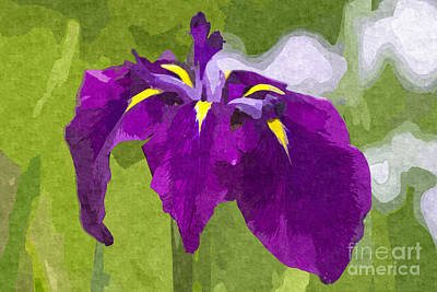 Digital Art - Beautiful Purple Iris Flower In Early Summer by Beverly Claire Kaiya
