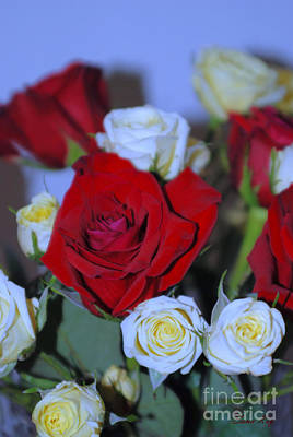 Photograph - Beautiful Red And Yellow Roses by Oksana Semenchenko