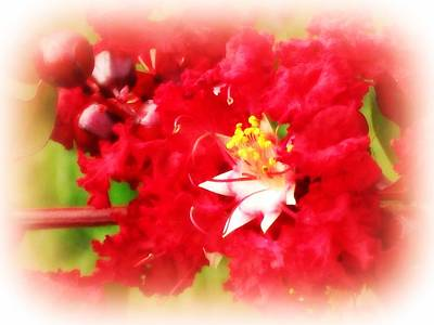 Beautiful Red Myrtle Bush Art Print