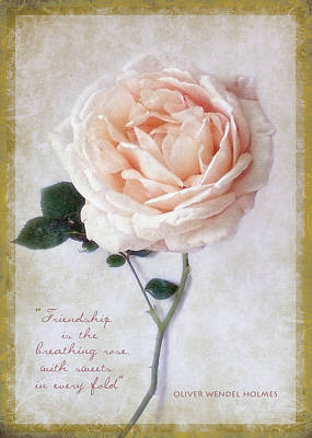 Photograph - Beautiful Rose Happy Birthday Friend Greeting Card by Louise Kumpf