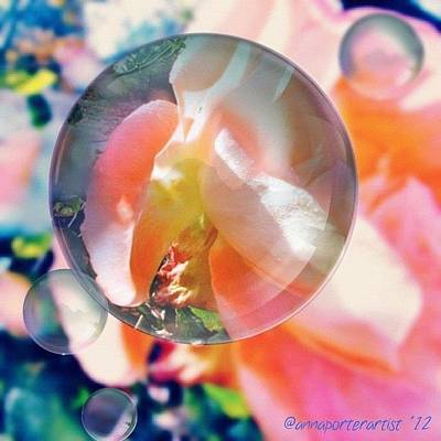 Apple Photograph - Beautiful Rose Marble - Autumn Light by Anna Porter