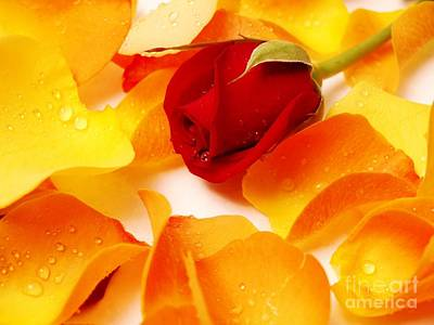 Beautiful Roses Valentine Art Print