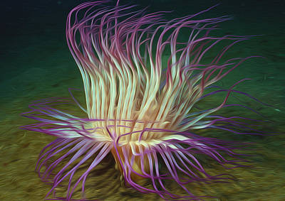 Asteroidea Painting - Beautiful Sea Anemone 1 by Lanjee Chee