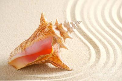 Beautiful Sea Shell Art Print