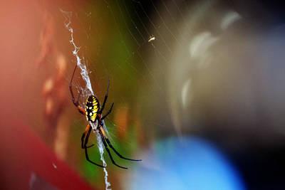 Beautiful Spider Art Print by Adam LeCroy