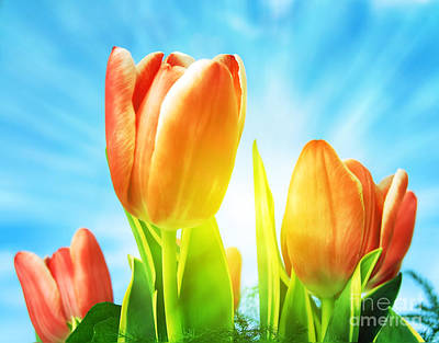 Day Photograph - Beautiful Spring Tulips Background by Michal Bednarek