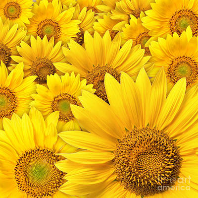Beautiful Sunflowers Closeup Art Print