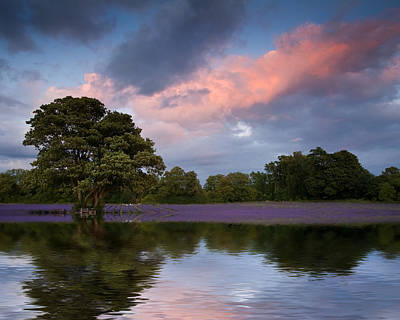 Reflective Surfaces Photograph - Beautiful Sunset Over Lavender Field Reflected In Calm Lake Wate by Matthew Gibson
