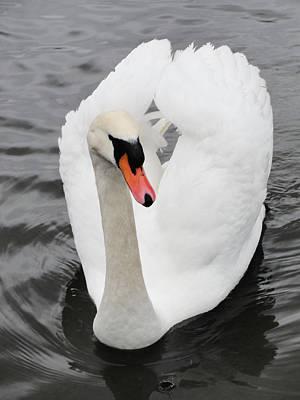 Art Print featuring the photograph Beautiful Swan by Tiffany Erdman
