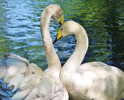 Beautiful Swans Art Print by Paulette Thomas