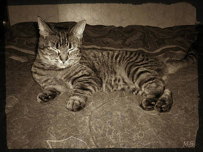 Art Print featuring the photograph Beautiful Tabby Cat by Absinthe Art By Michelle LeAnn Scott