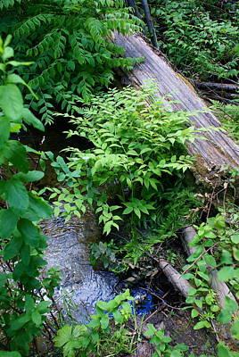 Photograph - Beautiful Tacoma Creek Photo 1 by Ben Upham III