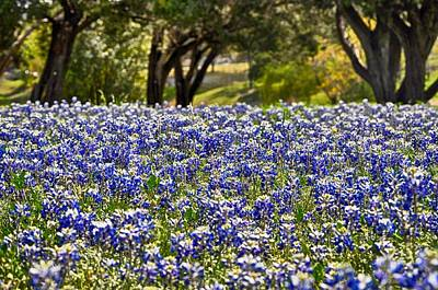 Photograph - Beautiful Texas In Spring by Kristina Deane