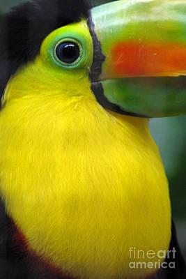 Digital Art - Beautiful Toucan Bird by Eva Kaufman