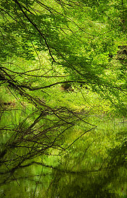 Leaf Photograph - Beautiful Tree On The Lake With Reflection by Modern Art Prints