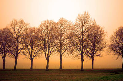 Beautiful Trees In The Fall Art Print by Tommytechno Sweden
