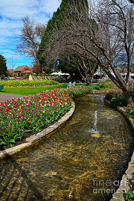 Tulip Trees Photograph - Beautiful Tulip Gardens by Kaye Menner