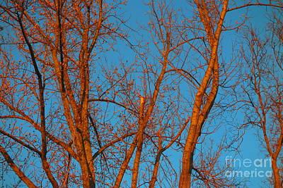 Photograph - Beautiful Turquoise Sky 2 by Tara  Shalton