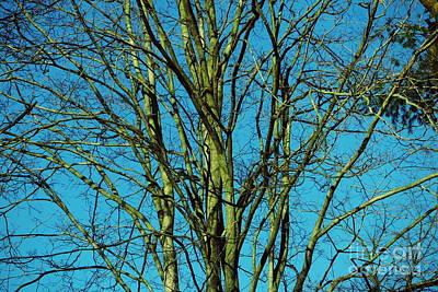Photograph - Beautiful Turquoise Sky by Tara  Shalton