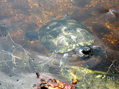 Photograph - Beautiful Turtle by Oksana Semenchenko