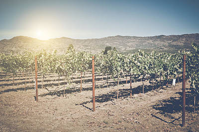 Grapes Photograph - Beautiful Vineyard In Napa Valley With Retro Instagram Film Styl by Brandon Bourdages