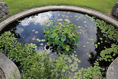 Photograph - Beautiful Water Garden by Carol Groenen