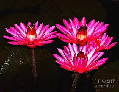 Photograph - Beautiful Water Lilies by Nick Zelinsky