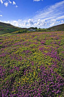 Photograph - Beautiful Welsh Color by Meirion Matthias