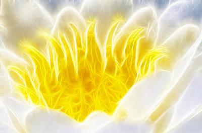 Photograph - Beautiful White And Yellow Flower - Digital Artwork by Matthias Hauser