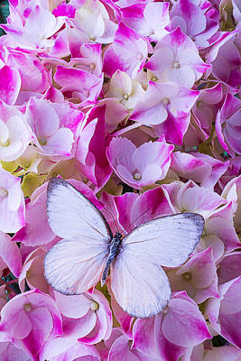 Hydrangea Photograph - Beautiful White Butterfly by Garry Gay