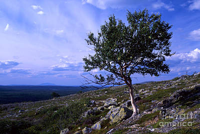 Pop Art - Beautiful wild landscape by Sasas Photography
