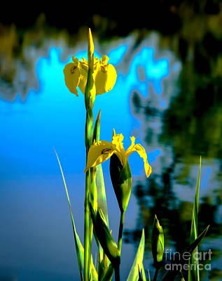 Photograph - Beautiful Wild Yellow Iris by Robert Bales