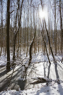 Photograph - Beautiful Winter Day In The Forest The Sun Is Shining by Matthias Hauser