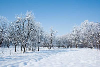Womens Empowerment - Beautiful Winter Landscape by Dan Radi