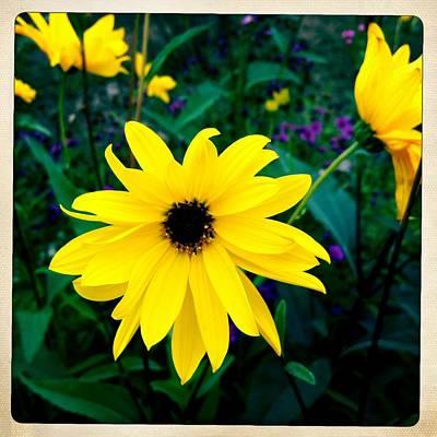 Yellow Wall Art - Photograph - Beautiful Yellow Flower by Matthias Hauser