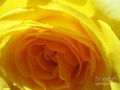 Photograph - Yellow Rose Macro by Tara  Shalton