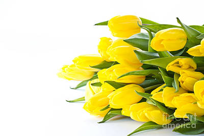 Beautiful Yellow Tulips Art Print by Boon Mee